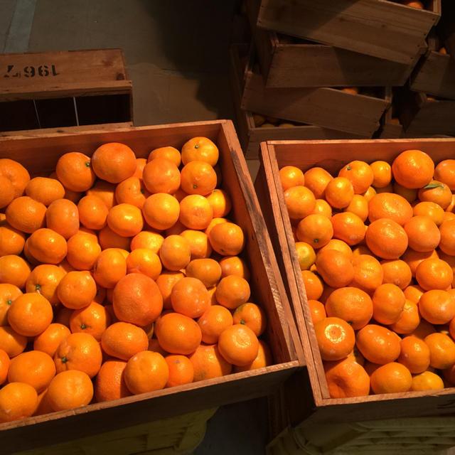 紀州 蔵出し みかん 食品/飲料/酒の食品(フルーツ)の商品写真