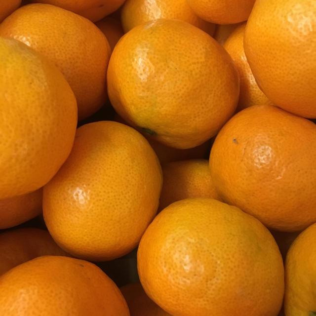 熊本県産 福岡県産 みかん20kg   食品/飲料/酒の食品(フルーツ)の商品写真