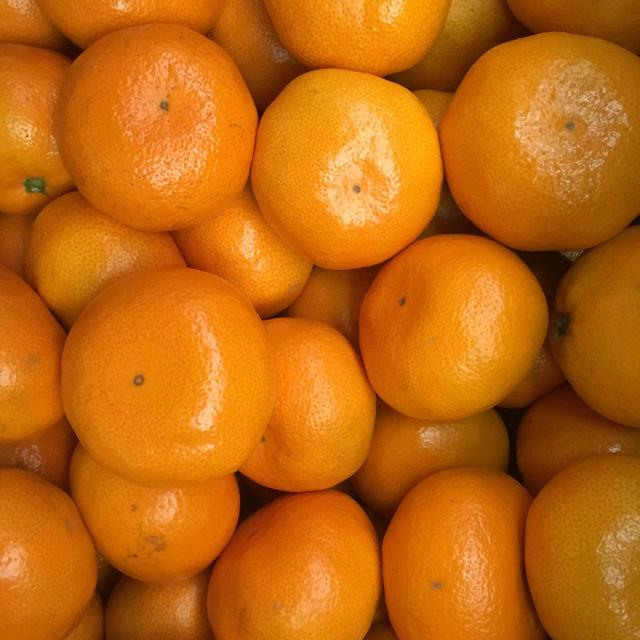 熊本県産 福岡県産 みかん10kg   食品/飲料/酒の食品(フルーツ)の商品写真