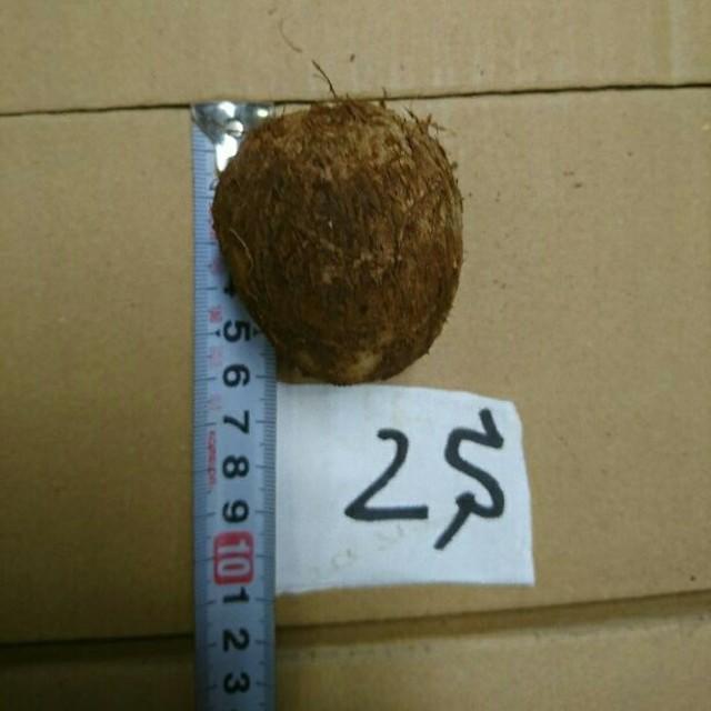 大分県産里芋 2Sサイズ 5㎏ 食品/飲料/酒の食品(野菜)の商品写真