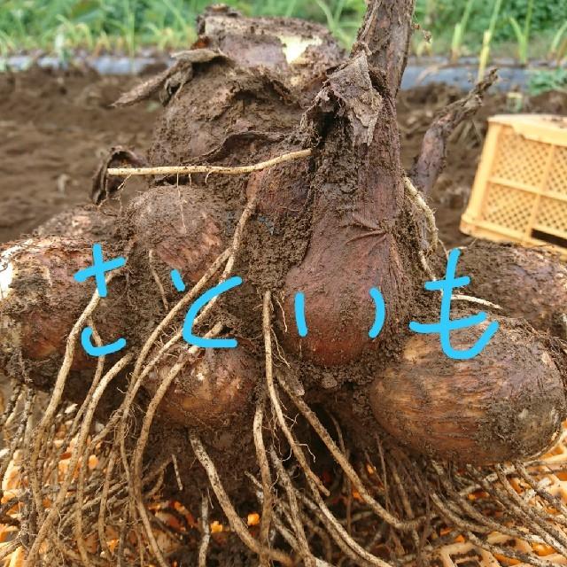 大分県産の里芋Sサイズ 5㎏ 食品/飲料/酒の食品(野菜)の商品写真