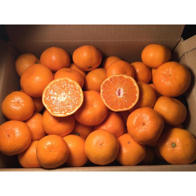 【最高級ブランド】夕やけみかん S〜L玉 3kg 食品/飲料/酒の食品(フルーツ)の商品写真