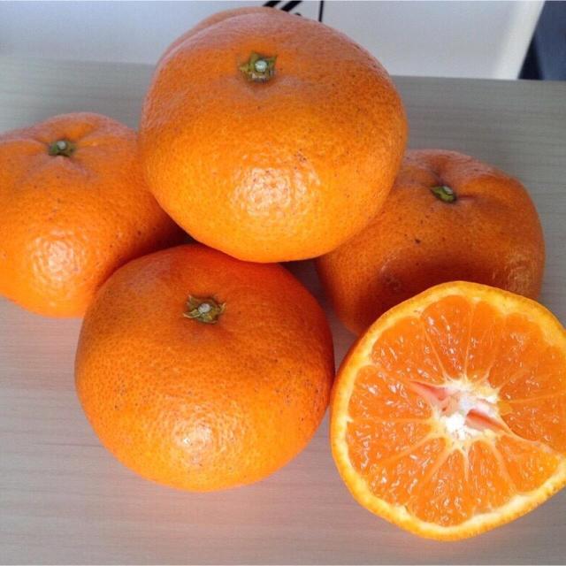 温州みかん(青島)2kg 食品/飲料/酒の食品(フルーツ)の商品写真