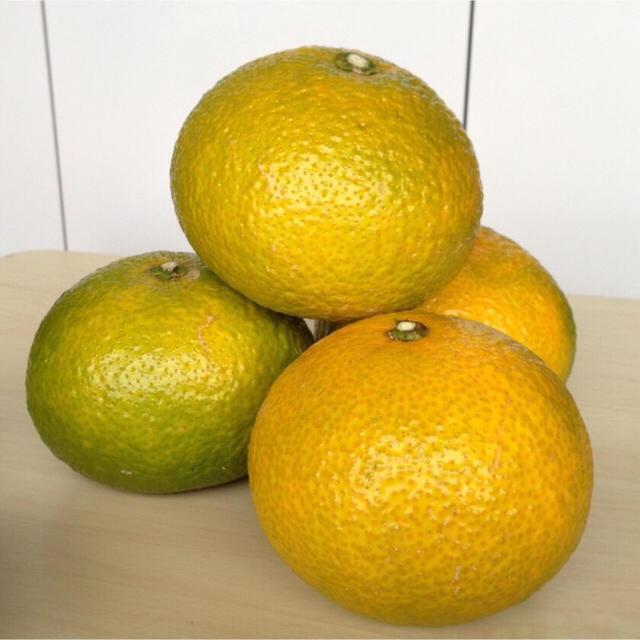 umemomopoo様専用 スイートスプリング5kg 食品/飲料/酒の食品(フルーツ)の商品写真