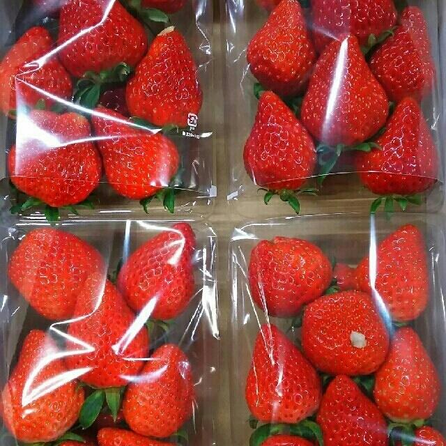 朝採り完熟収穫❗いちご4パック(かおりの2P紅ほっぺ2P) 食品/飲料/酒の食品(フルーツ)の商品写真