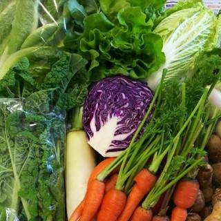 色々お野菜 野菜詰め合わせ(野菜)