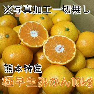 はちみちゅ様専用 熊本特産極早生みかん約10kg 送料無料1(フルーツ)