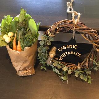 【期間限定】お試し無農薬野菜セット(野菜)