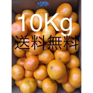 和歌山県 傷あり訳ありみかん10キロ(フルーツ)