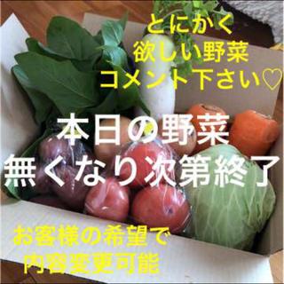 新鮮本日の野菜 詰め合わせ 大好評 コメント下さい♡本日発送(野菜)