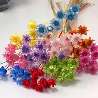 花材  スターフラワー  11色(ドライフラワー)