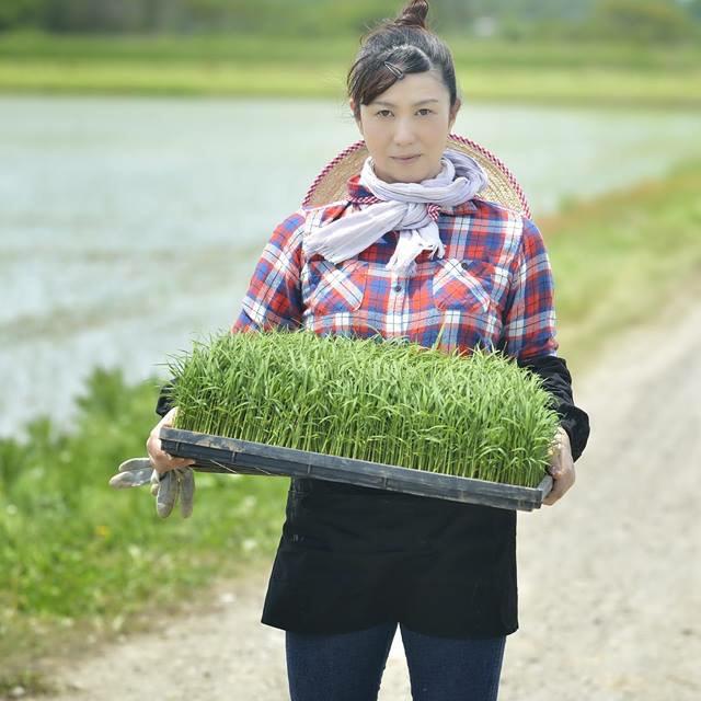 特別栽培米あきたこまち 食品/飲料/酒の食品(米/穀物)の商品写真