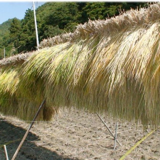【アヒルのお米・はざ掛け】平成29年度岡山県備前市産5㎏(玄米) 食品/飲料/酒の食品(米/穀物)の商品写真