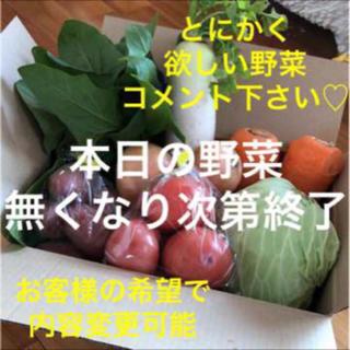 採れたて新鮮 本日の野菜 本日発送 内容変更オッケー(野菜)
