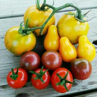 こなこ様専用〉トマトの種いろいろ(野菜)