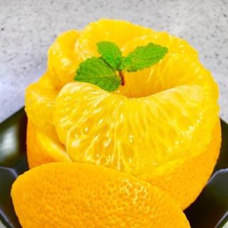 【果実がはじける】八朔 5kg(フルーツ)