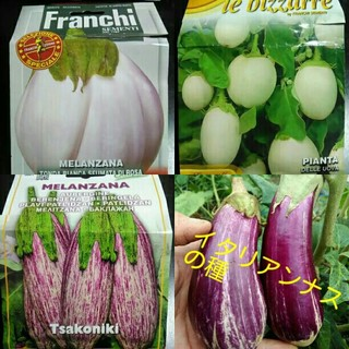 イタリア野菜の種子 ティグリナというゼブラナス、白大玉ナス、タマゴなす(野菜)