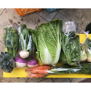 【限定・白菜入り】渥美半島から直送!旬彩野菜バスケット【M】(野菜)