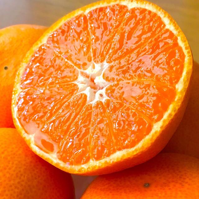【食べ応え十分】大玉みかん 5kg 食品/飲料/酒の食品(フルーツ)の商品写真