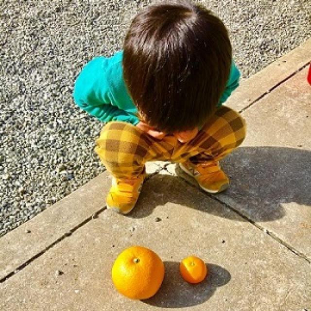 はじける食感!八朔 5kg 食品/飲料/酒の食品(フルーツ)の商品写真