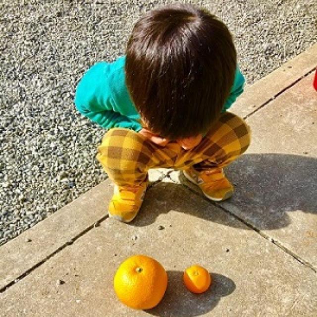 【はじける食感!】八朔 5kg 食品/飲料/酒の食品(フルーツ)の商品写真
