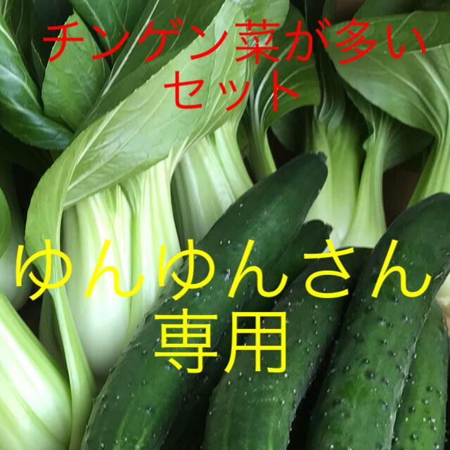 チンゲン菜とキュウリ 食品/飲料/酒の食品(野菜)の商品写真