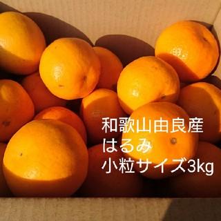 和歌山由良産 はるみ 小粒サイズ 3kg(フルーツ)