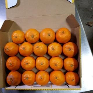 蒲郡みかん ポンカン 1.1kg サイズ混合 送料無料(フルーツ)
