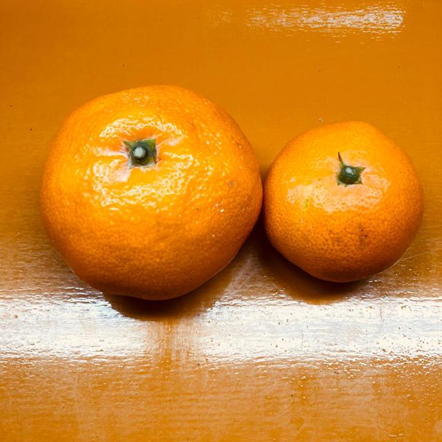 【残り10箱】食べ応え十分!大玉みかん 食品/飲料/酒の食品(フルーツ)の商品写真
