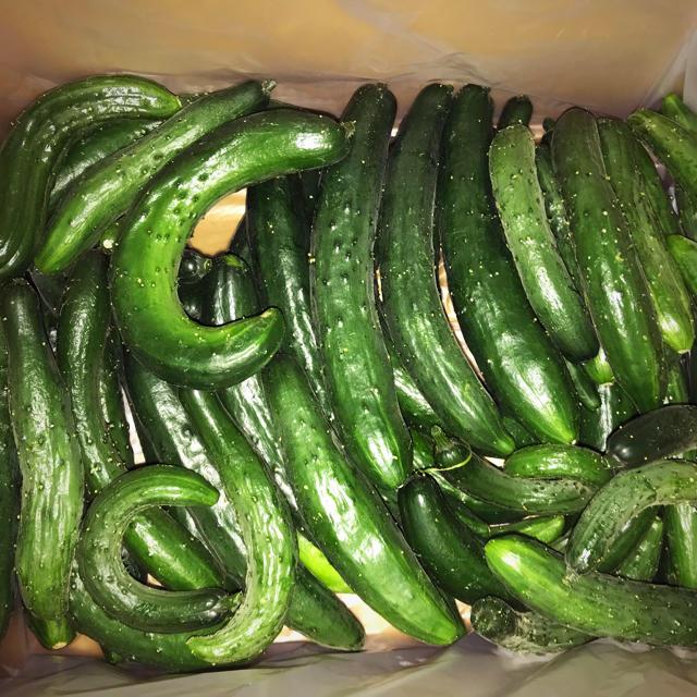 チンゲン菜&規格外品キュウリ 食品/飲料/酒の食品(野菜)の商品写真