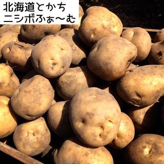 セール中‼️北海道とかちニシボふぁ〜む男爵いも『大地の塊』(野菜)