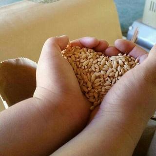 高村農園こうちゃん米お試しセット(米/穀物)