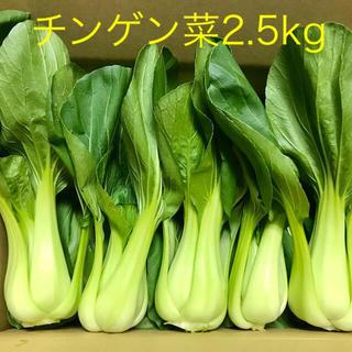 チンゲン菜2.5kg以上(野菜)