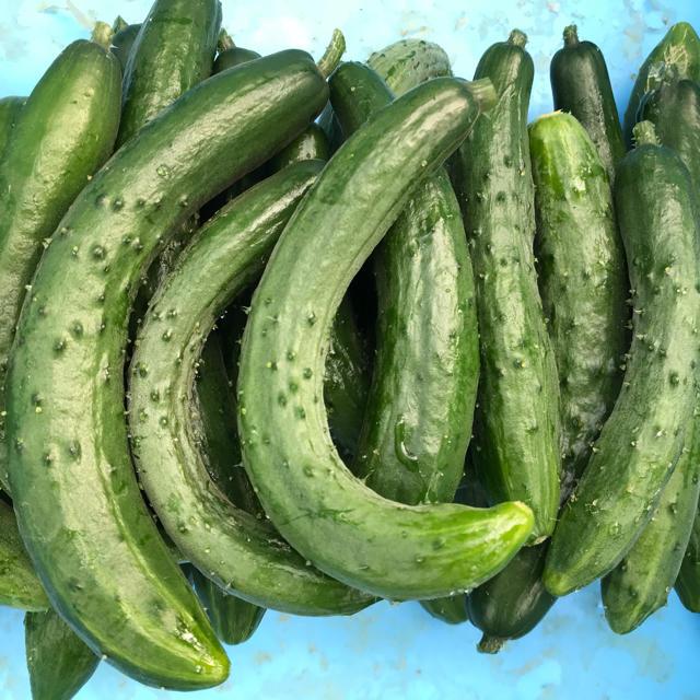 規格外品キュウリ4kg〜5kg 食品/飲料/酒の食品(野菜)の商品写真