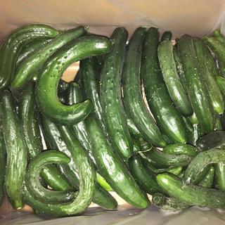 規格外品キュウリ4kg〜5kg(野菜)
