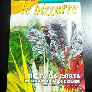 カラフルなイタリア野菜の種子 スイスチャード 30粒(野菜)