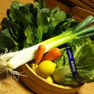 アンパンマン様専用 京野菜 詰め合わせ セット 80サイズ 無農薬(野菜)