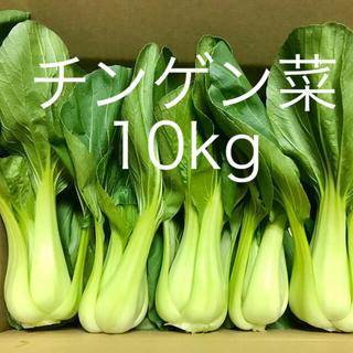 チンゲン菜10kg(野菜)