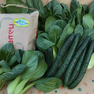 お米3kg&キュウリ&チンゲン菜(野菜)