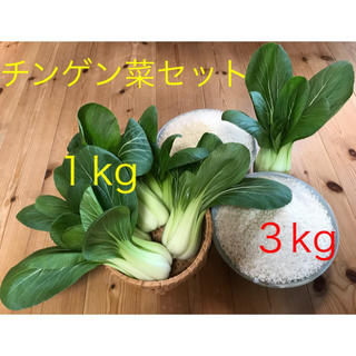 お米3kg&チンゲン菜(野菜)