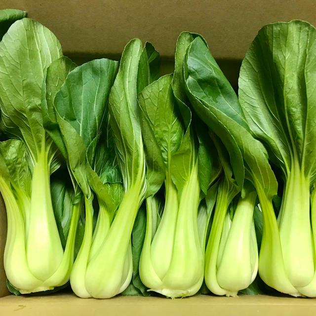 コシヒカリ3kg&チンゲン菜 食品/飲料/酒の食品(野菜)の商品写真