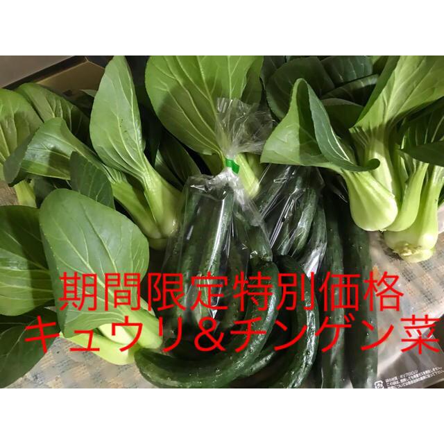 チンゲン菜&個性的なキュウリ達 食品/飲料/酒の食品(野菜)の商品写真