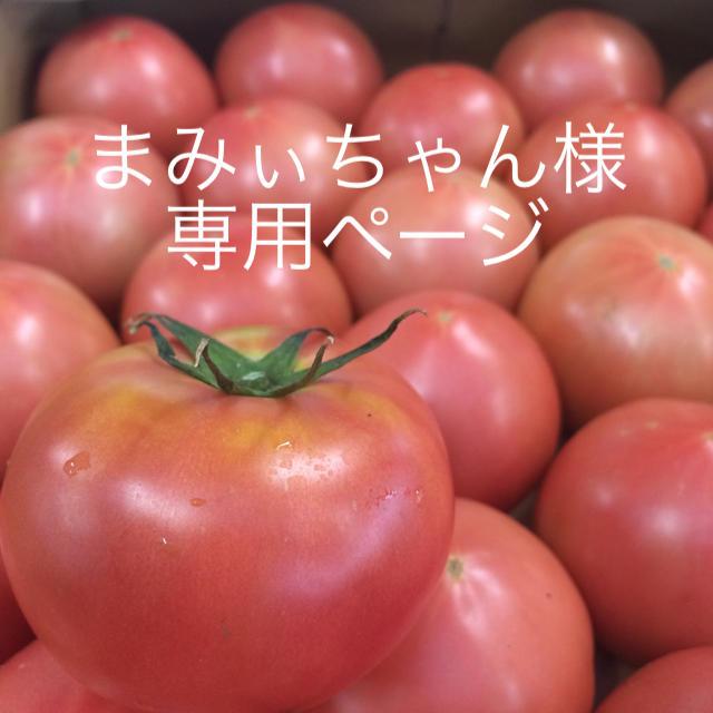 まみぃちゃん様専用 4キロ 食品/飲料/酒の食品(野菜)の商品写真