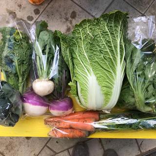 【ひめひよはん様専用】渥美半島から直送!旬彩野菜バスケット【M】(野菜)