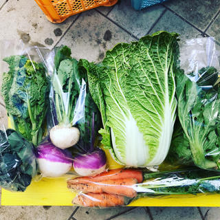 渥美半島から直送!旬彩野菜バスケット【M】(野菜)