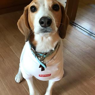 シュプリーム(Supreme)のシュプリーム 犬 パーカー(犬)
