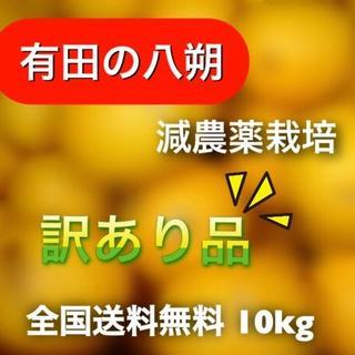 【有田の八朔】減農薬10kg モリ・カケ・スパ・ブラックボックス(フルーツ)