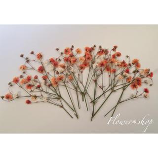 かすみ草*押し花(その他)