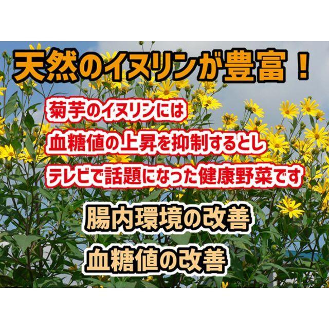 イヌリン野菜の王様 キクイモ(土付き)1キロ 食品/飲料/酒の食品(野菜)の商品写真