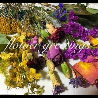 ドライフラワー 花材 ドナセナ シルバープラント入り 花片おまけ付き(ドライフラワー)